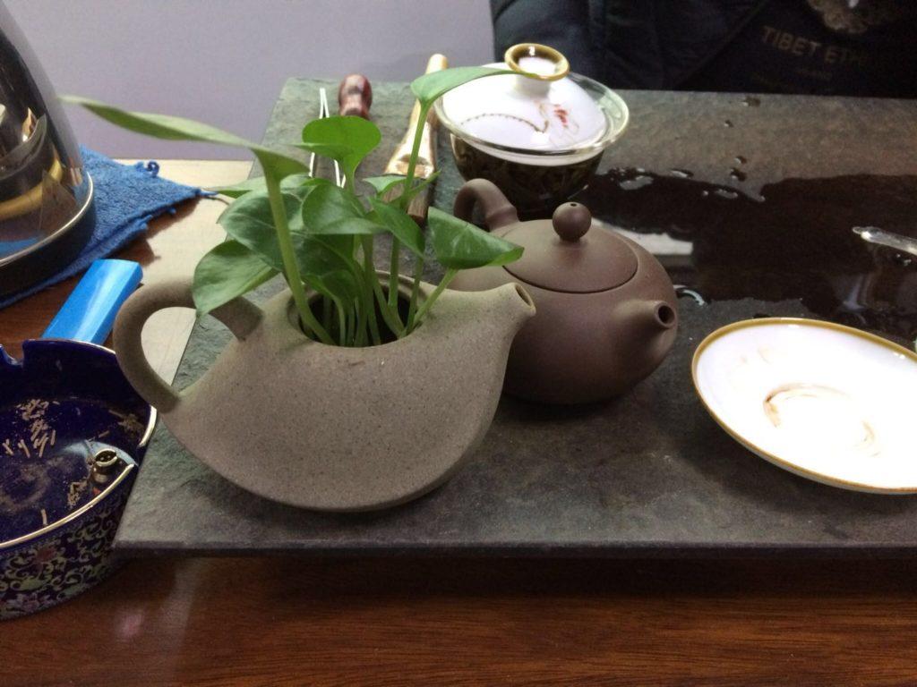 中国茶の茶器と観葉植物