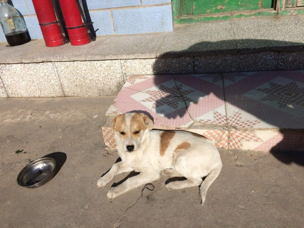 北京郊外の犬