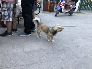 北京の町中の犬