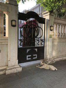 天津で見かけた犬